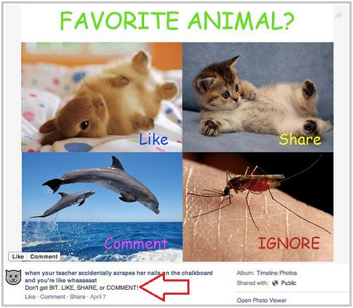 facebook scheme